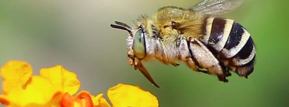 Bee killing pesticide 1
