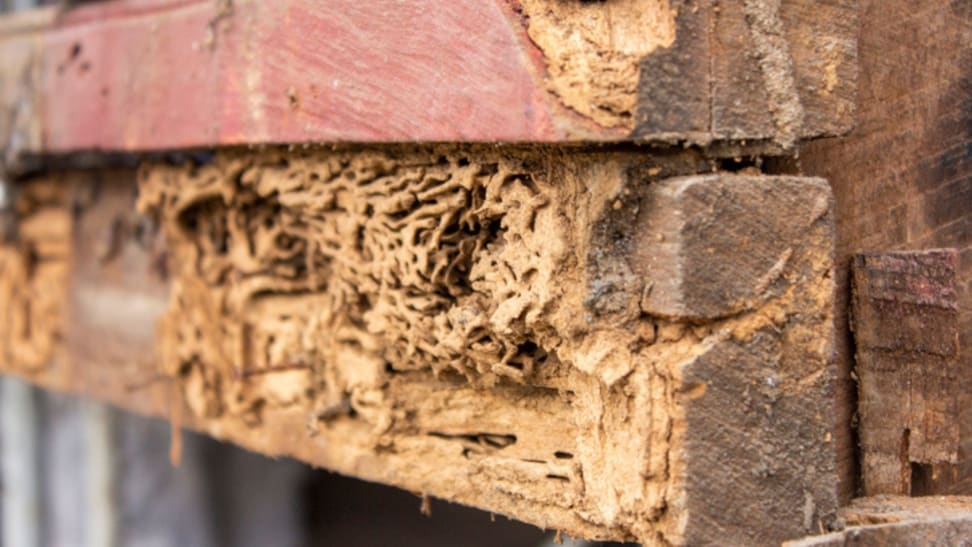 Wood that has been eating by termites.