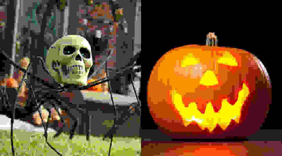 Skeleton spider and Halloween carved pumpkin