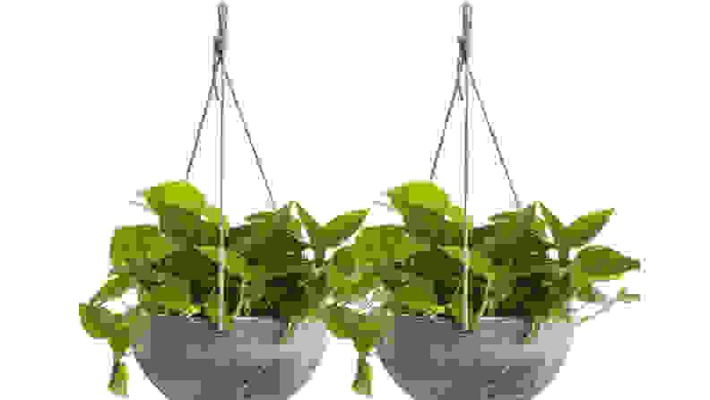 hangingplanter