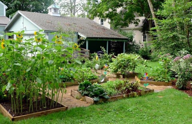 Veggie Garden (llstalteri).jpg
