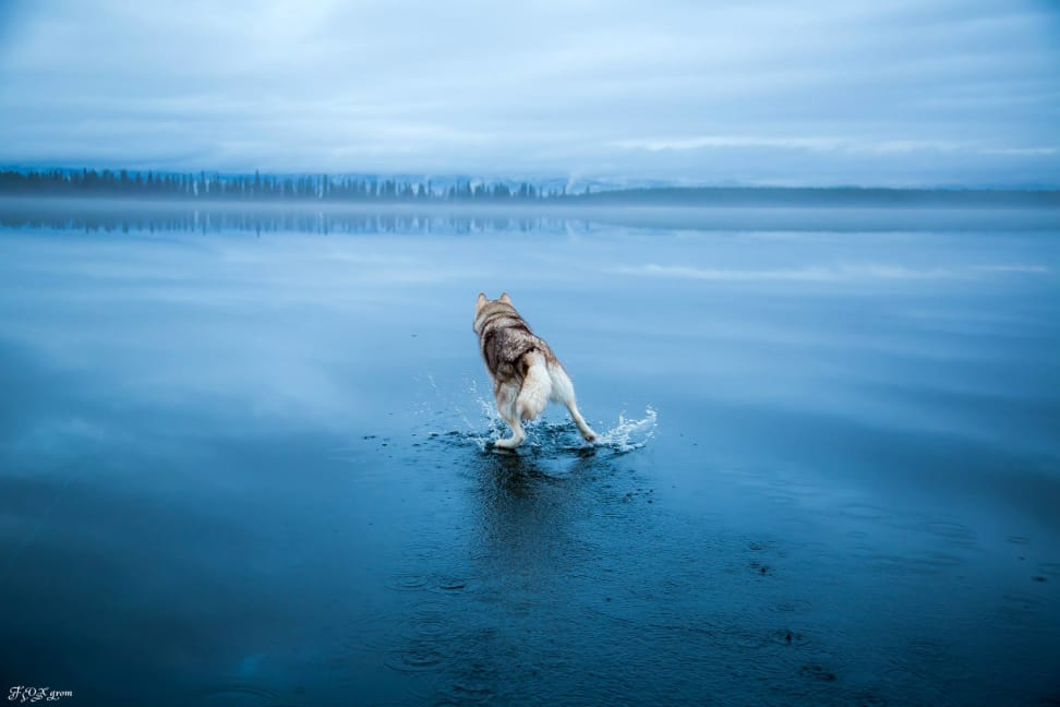 Huskies-Walking-On-Water-10.jpg