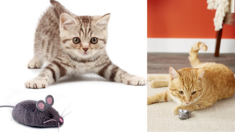Several images of cats playing with the Hexbug toy.