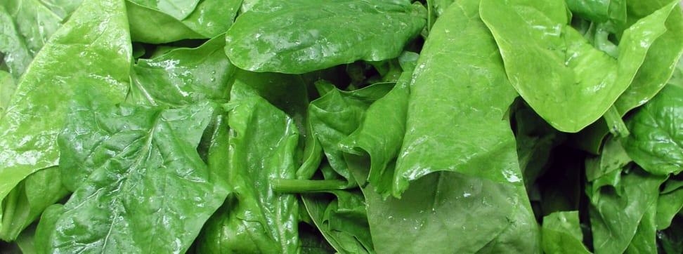 A bunch of spinach leaves.