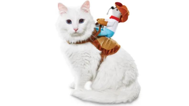 Cowboy riding a cat