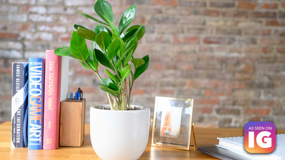 The Sill review: We tried the online plant shop with a cult following