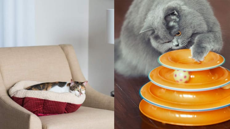 309f8d25b6d 20 popular cat products on Amazon - Reviewed Home & Outdoors