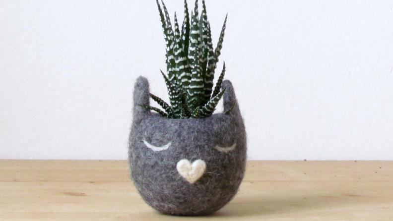 Cat succulent