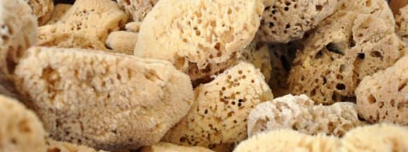 Natural sea sponges hero flickr walterpro