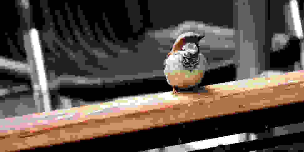 Bird Sample