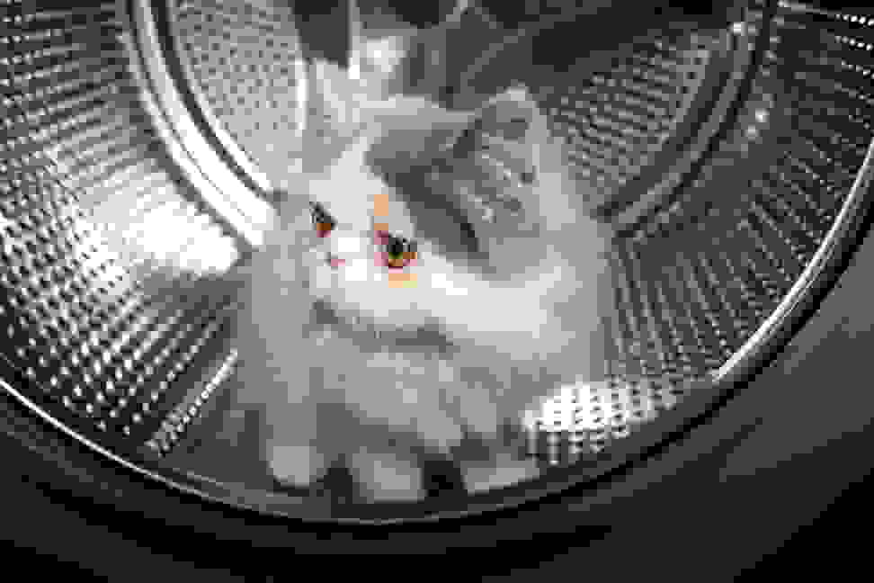 Cat in a washer
