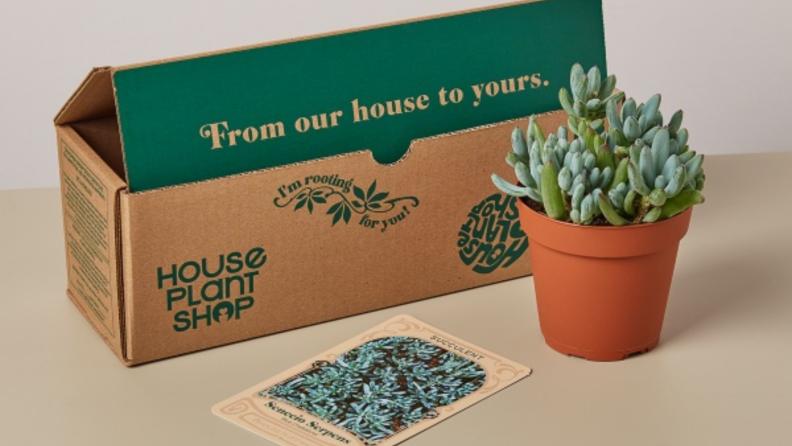 House Plant Shop