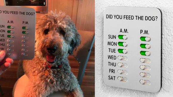 Dog food calendar