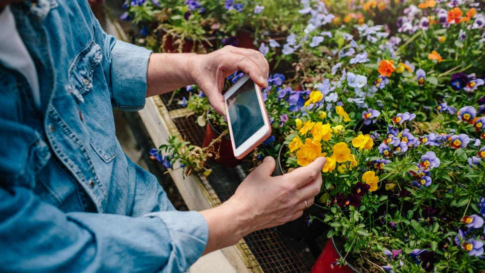 Person taking picture of flower with camera phone