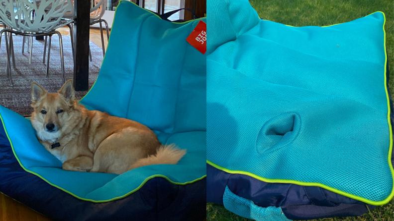 On left, tan colored dog reclining on navy-aqua