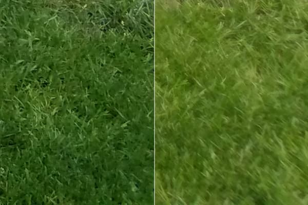 HTC 10 and Samsung Galaxy S7 Camera Comparison Shot 1