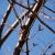 Panasonic lumix gx85 review sample photo buds