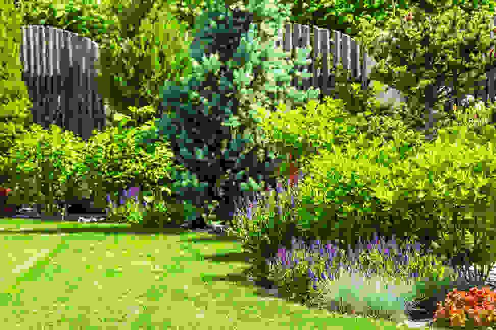 Lush garden in the sun