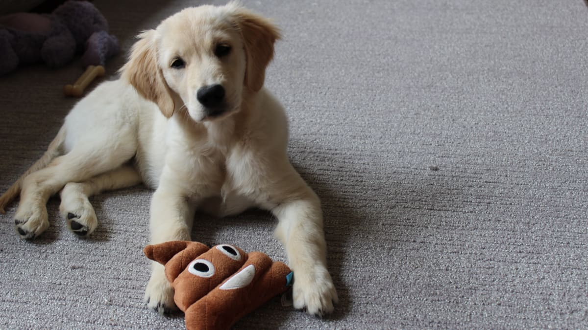 I bought 15 popular puppy products on Amazon—and only some are actually worth it