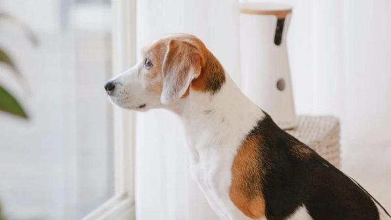 An image of a dog next to a pet camera.
