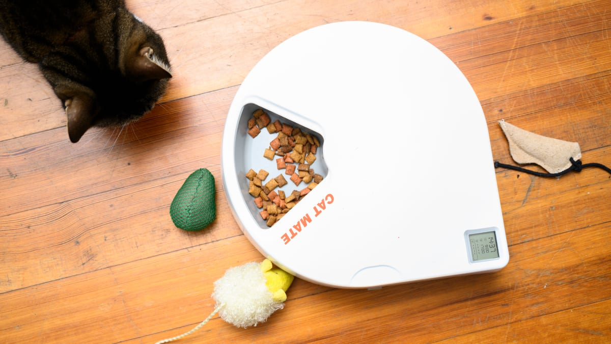 My cat and I are obsessed with this automatic pet feeder—here's why