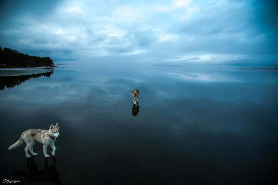 Huskies-Walking-On-Water-9.jpg