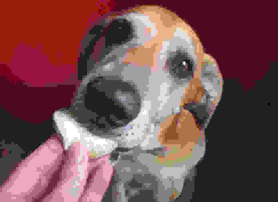 Dog eating food