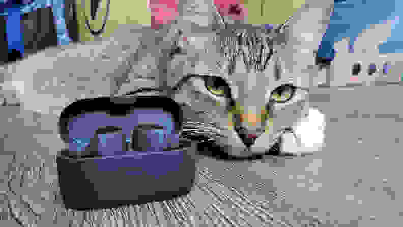 Jabra's all-black, matte earbuds sit in their open case in front of a whimsical cat who is looking at the camera behind striped grey, black, and tan fur.