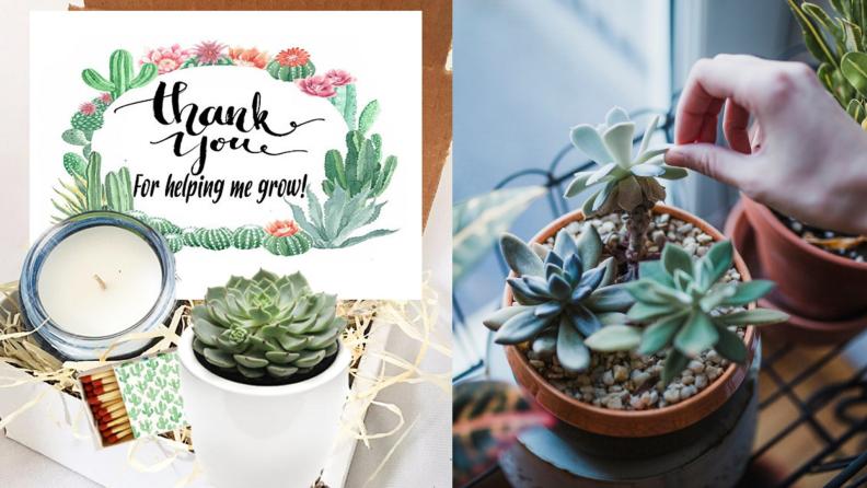 Mini succulent gift box
