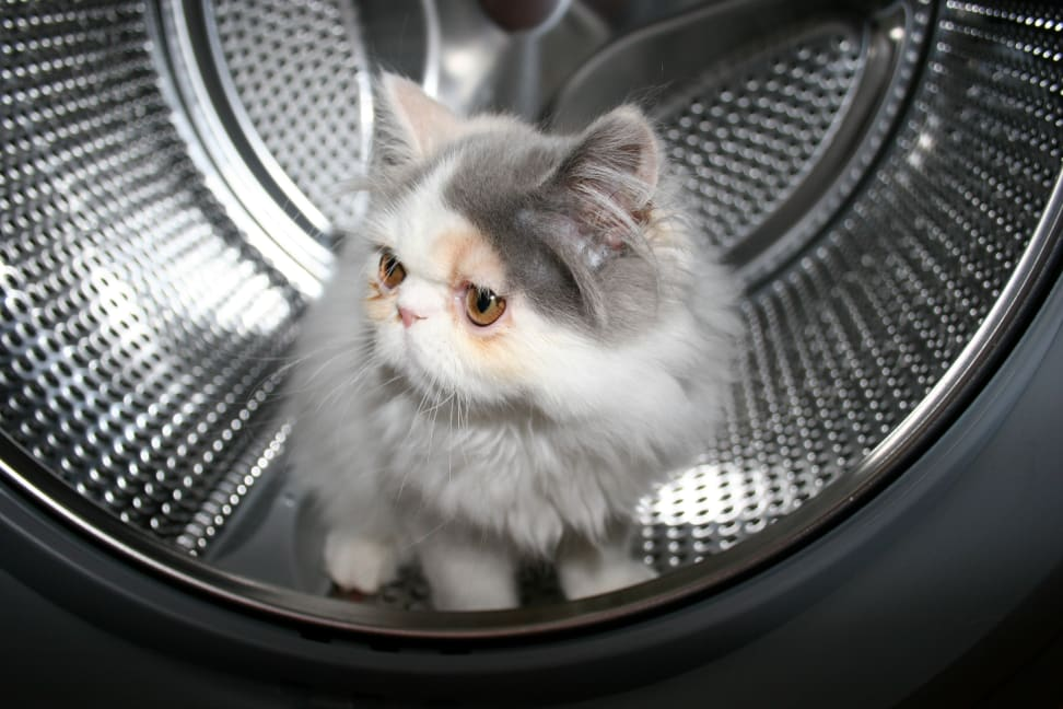 Cat in a washer