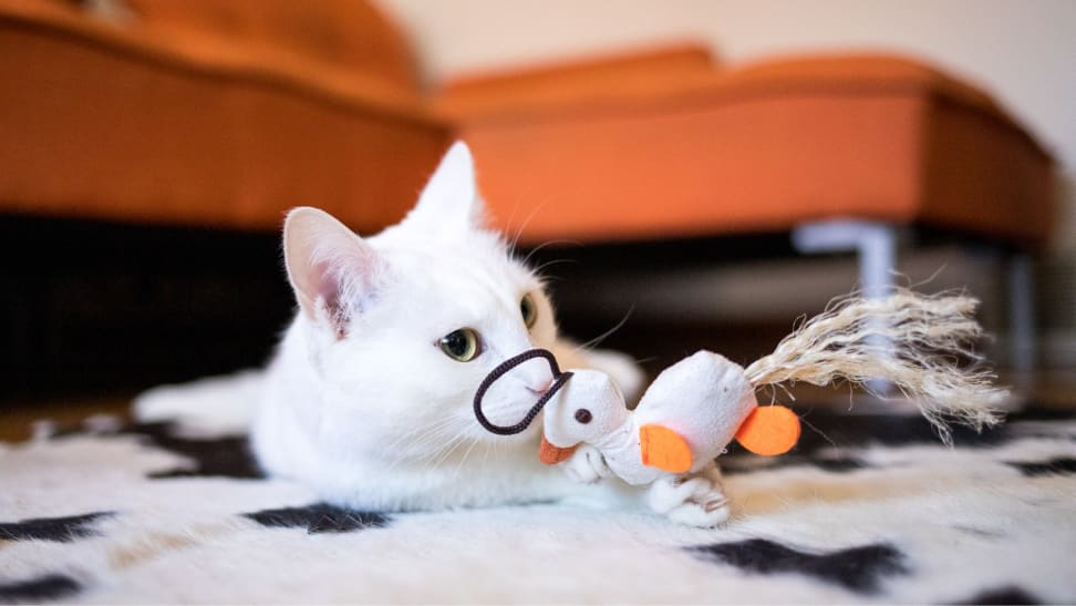Cat playing with duck toy
