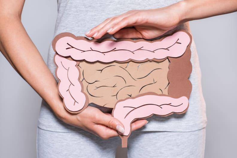 Intestine diagram
