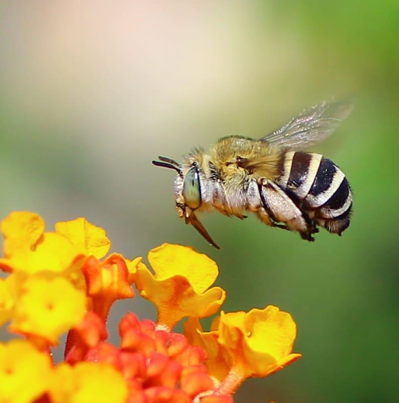 Bee-killing pesticide