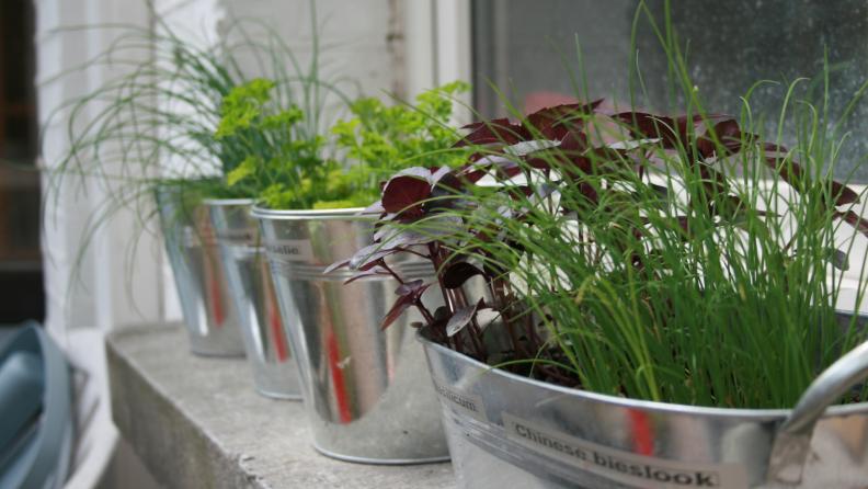 inside-herbs
