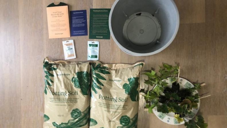 Pot, plants, and soil.