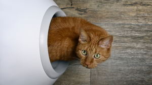 Cute cat poking its head out of a self-cleaning litter box.