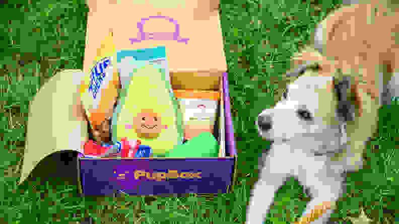 Open PupBox