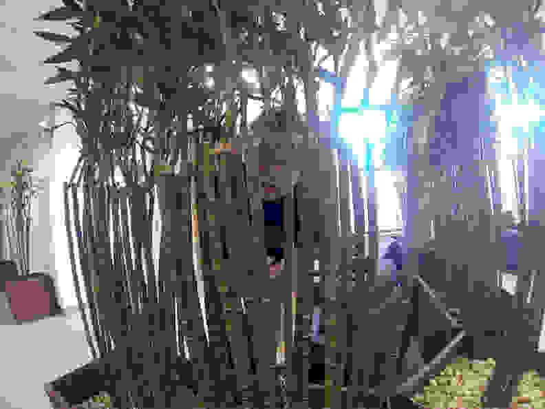 Covert Selfie
