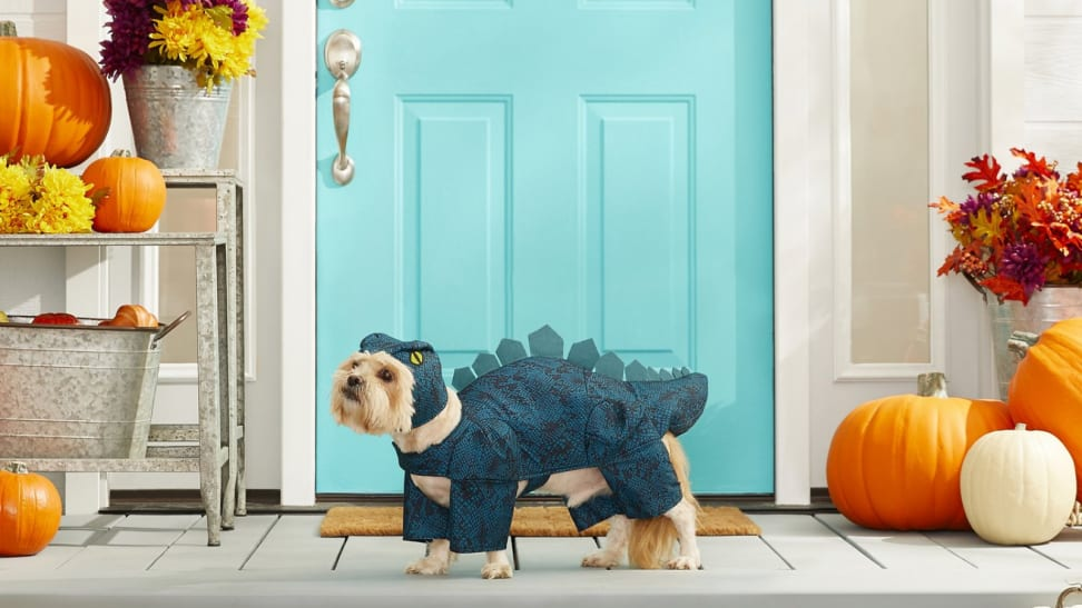 Dog in a dinosaur outfit in front of a door