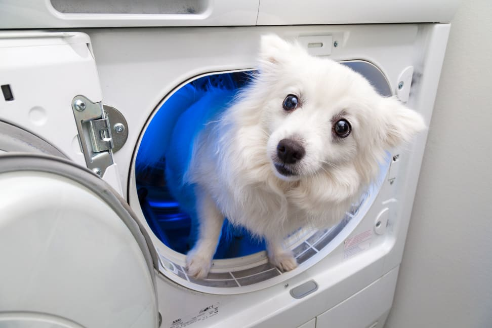 A dog looks out of a dryer