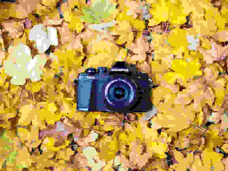 olympus-om-d-e-m10-leaves