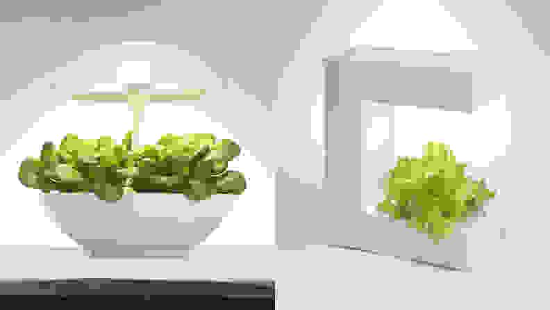 Akarina 01 and Akarina 14 Planters
