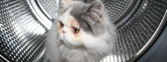 Cat in washer detergent pod hero flickr somenametoforget