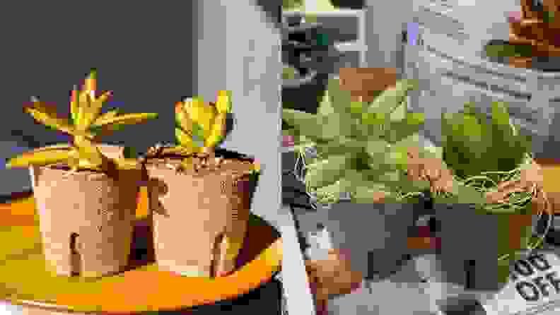 Succulent Studios August Box