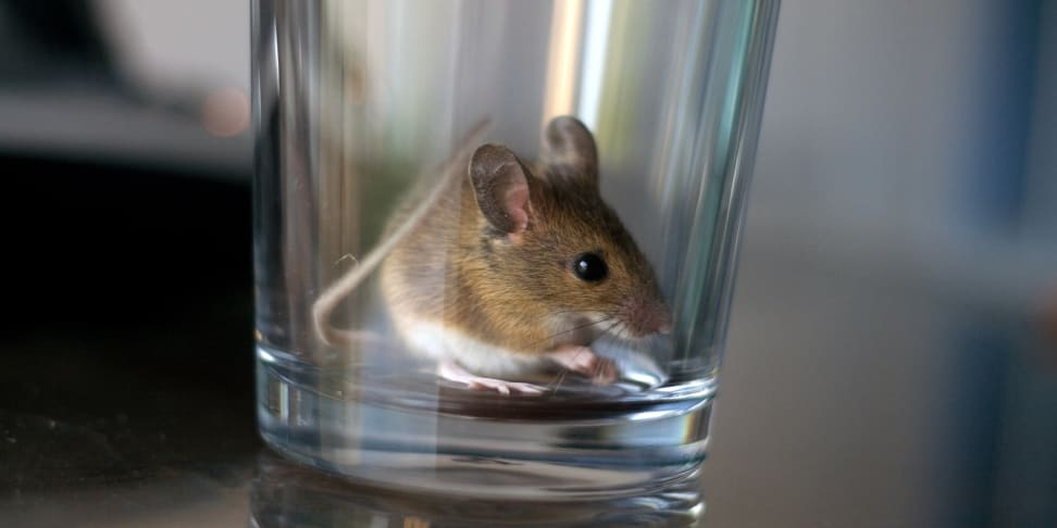 Mouse in a glass