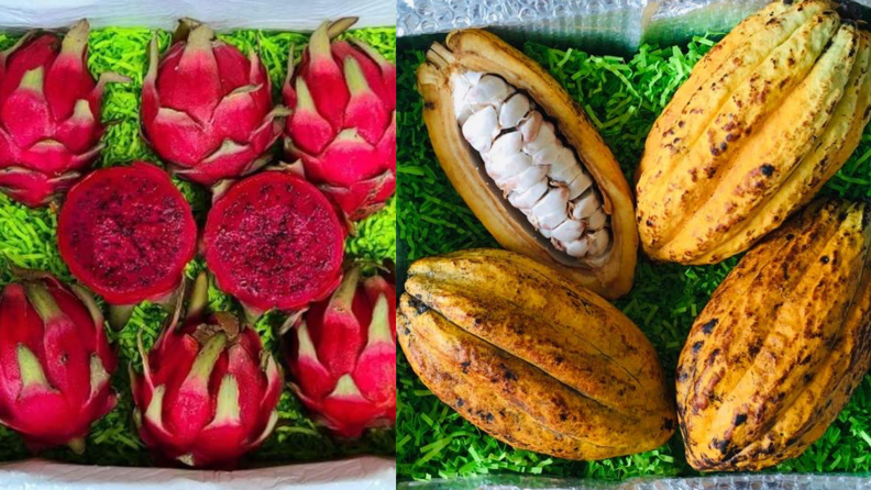 Tropical Fruit Box dragon fruit and cacao