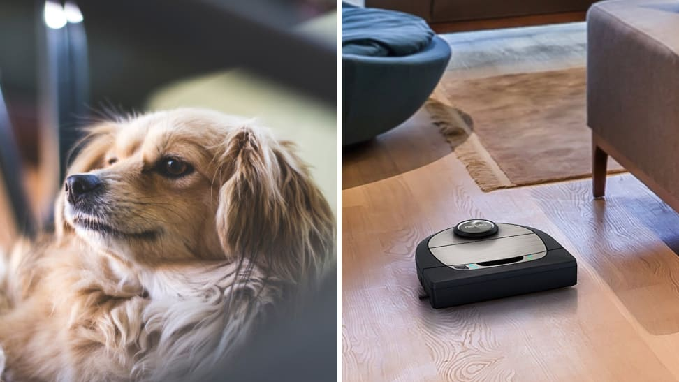 The Best Robot Vacuums for Pet Hair of 2019 - Reviewed Vacuums