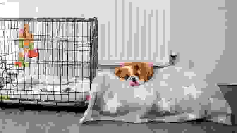 A bull dog lays on a dog bed that's next to a wire dog crate