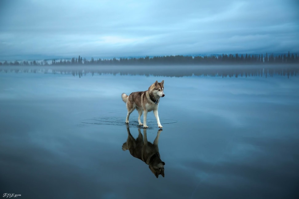 Huskies-Walking-On-Water-3.jpg
