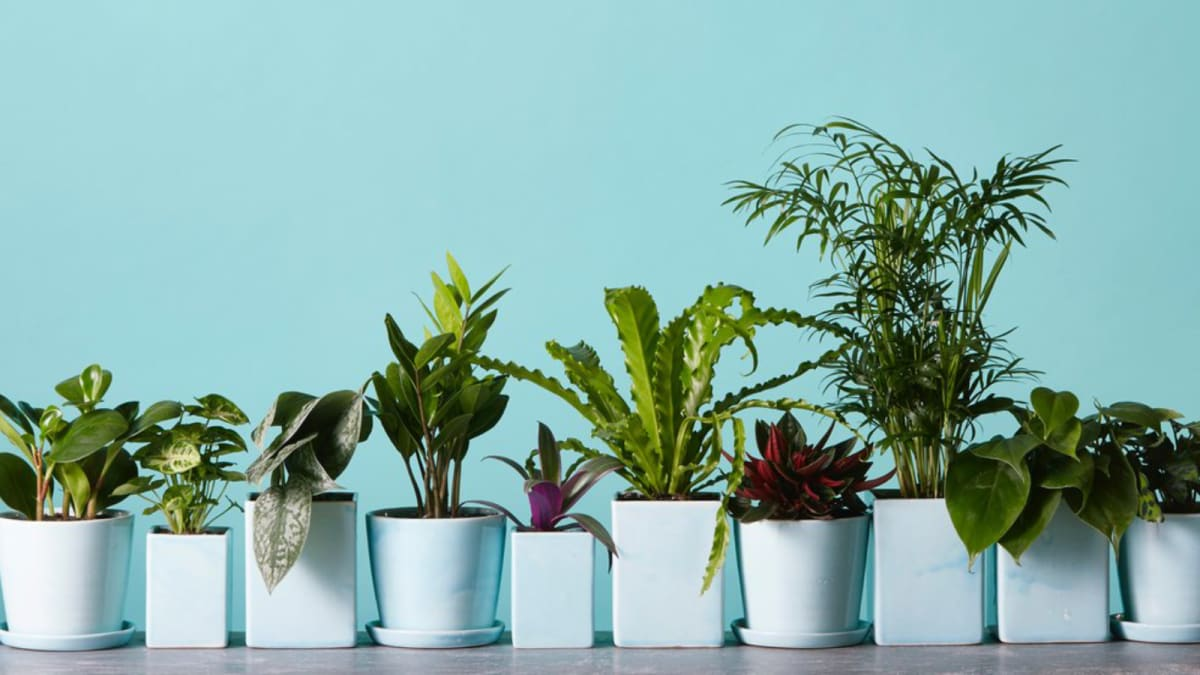 These are the 6 most popular houseplants for fall